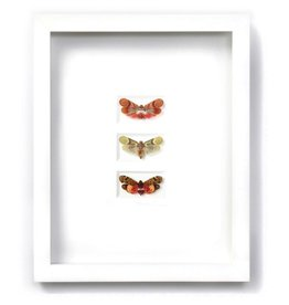 Pheromone 11 x 14 Planthopper Trio in White