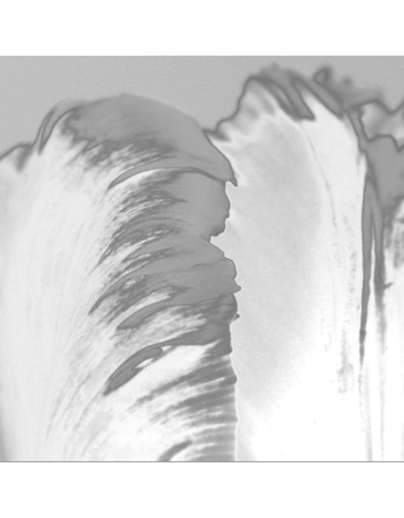 "Art Addiction 24""x36"" Parrot Tulip on Acrylic"