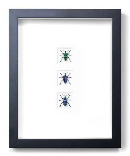 """11""""x14"""" Tropical Weevils"""