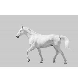 """Art Addiction 40""""x60"""" Horse on Grey Background"""