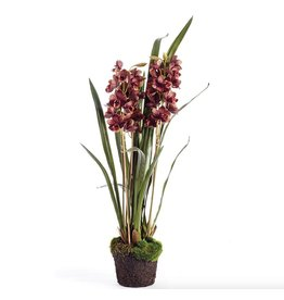 Napa Home and Garden CYMBIDIUM X3 DROP-IN 36 INCH
