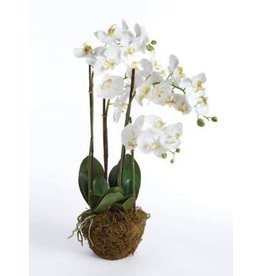 30&quot; PHALAENOPSIS DROP-IN<br /> 30&quot; PHALAENOPSIS DROP-IN<br /> 30&quot; PHALAENOPSIS DROP-IN<br /> 30&quot; PHALAENOPSIS DROP-IN<br /> 30&quot; PHALAENOPSIS DROP-IN<br /> CONCRETELITE LOW OVAL PLANTERS