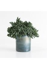 Thames Vase, 7.75x7.75