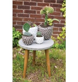 Accent Decor Cacti Pot, White - 7.25x6.5""