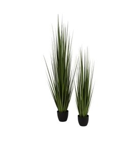 Gold Leaf Design Group Potted Century Grass
