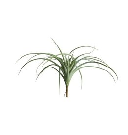 "Gold Leaf Design Group Tillandsia 14"" - Grey"