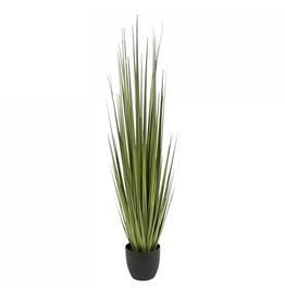 "Potted Century Grass - 60""H"