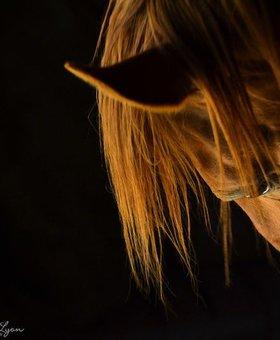 DandeLyon Photography Redhead~Art