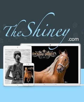 The Shiney Foundation The Shiney Friend ~ $25 Donation