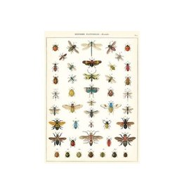Natural History Insects Poster