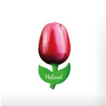 Souvenir Tulip on Magnet Red/White 2""