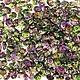 Czech Superduos, Crystal Magic Violet-Green, 25g