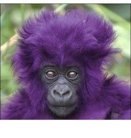 VapinUSA Grape Ape