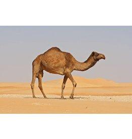 VapinUSA Desert Llama