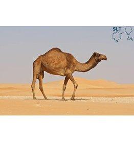 VapinUSA Desert Llama   30ml   Salt