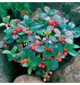 VapinUSA Winnergreen | 30ml | Salt