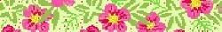 Canvas SALE - PINK HIBISCUS BUCKLETTE  BL644P   REG $72.00