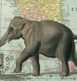 """Italy Cavallini Print, Elephant India, 20"""" x 28"""""""