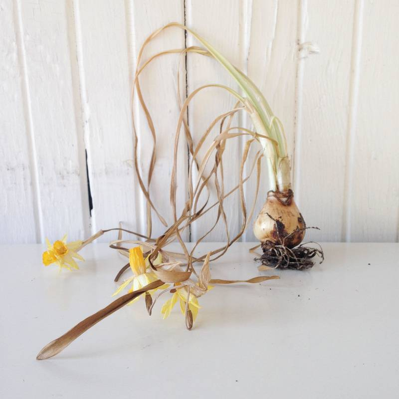 THE BRIGHTEST BULB