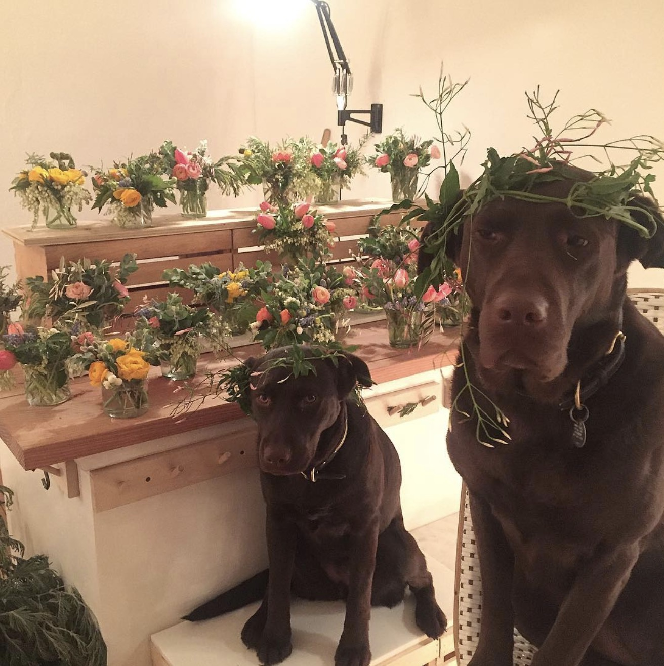 Labs in Flower Crowns Shop Dog