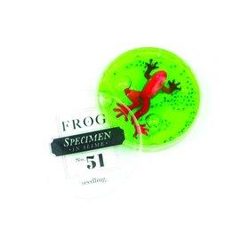 Seedling Seedling Frog Specimen #51
