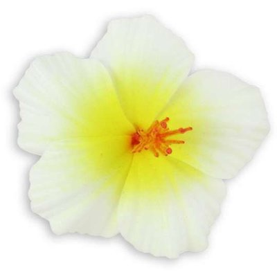 Natural Small Hibiscus Clip