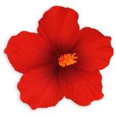 Red Large Hibiscus Clip