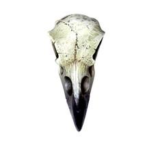 Alchemy England 1977 Reliquary Raven Skull