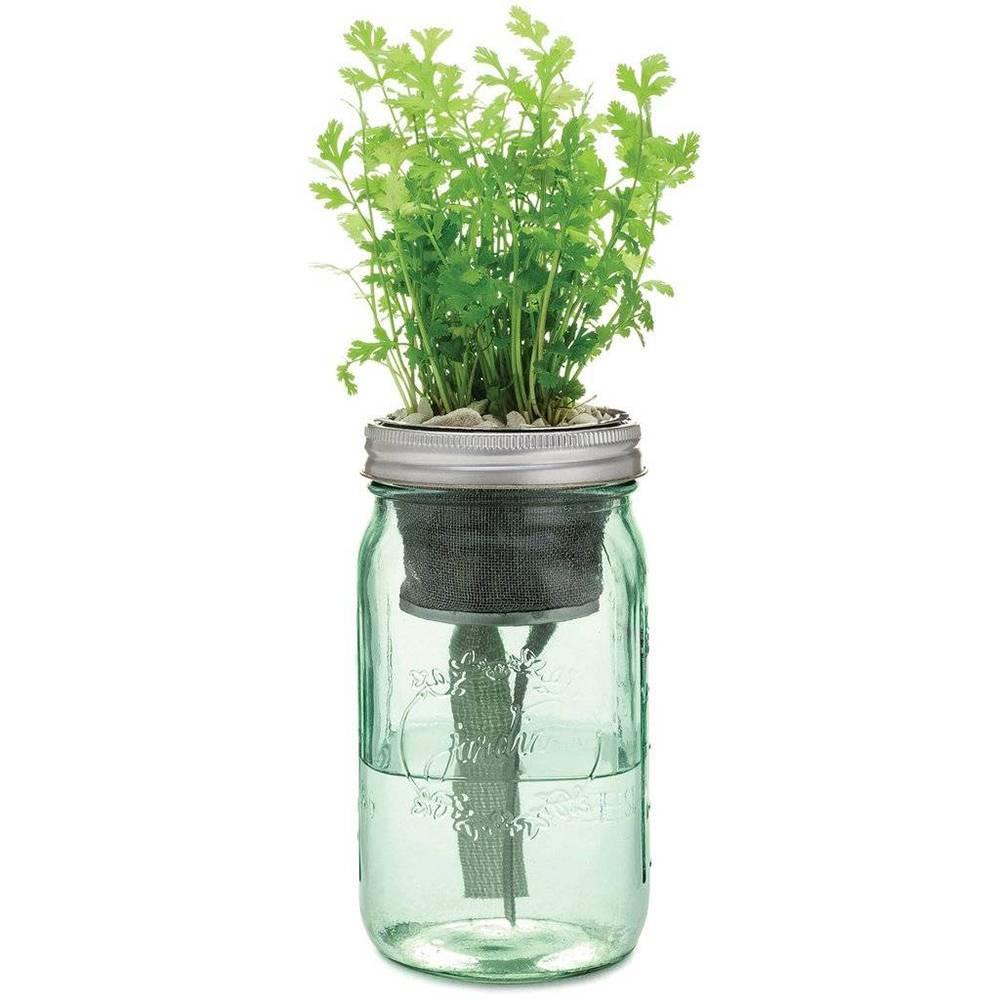 modern sprout garden herb jar kit