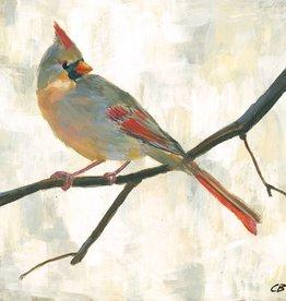 cody blomberg cody blomberg 6x6 female cardinal