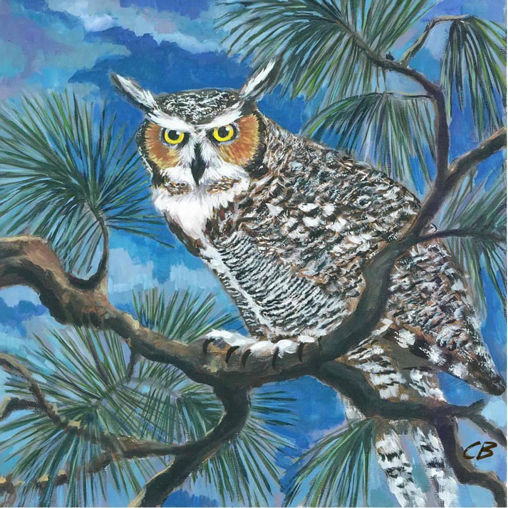 cody blomberg cody blomberg 6 x 6 horned owl
