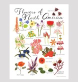 small adventure small adventure flowers of north america art print