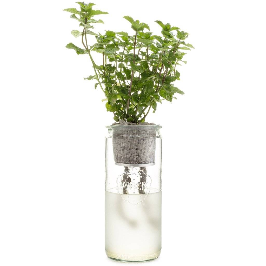modern sprout modern sprout eco planter