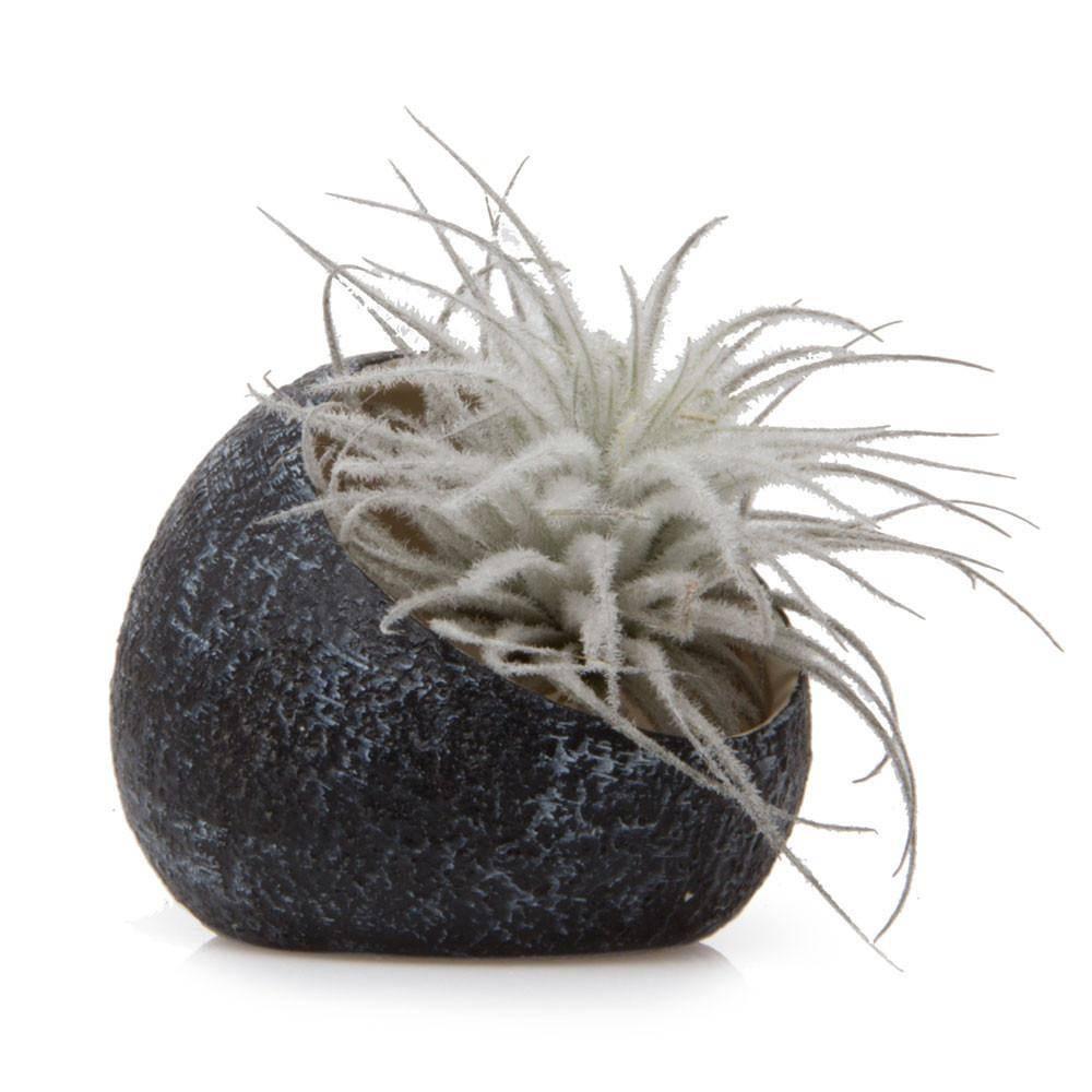 chive chive terrarium koski black