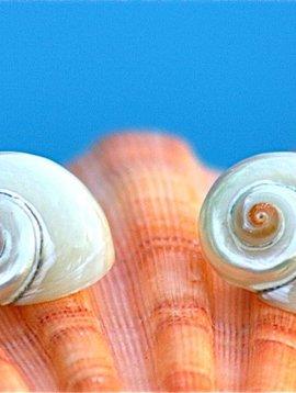 SASHA LICKLE PEARL AND ORANGE TURBO SHELL EARRINGS