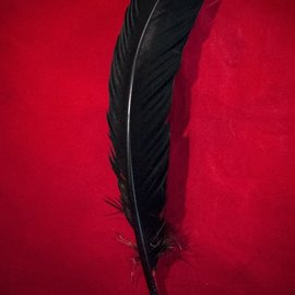 Hex Black Feather Quill Pen