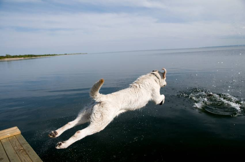 Taking Your Dog to His Favorite Swimming Hole