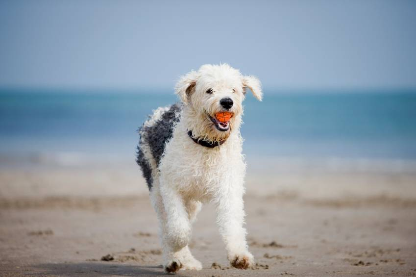 Going to The Beach With Your Dog