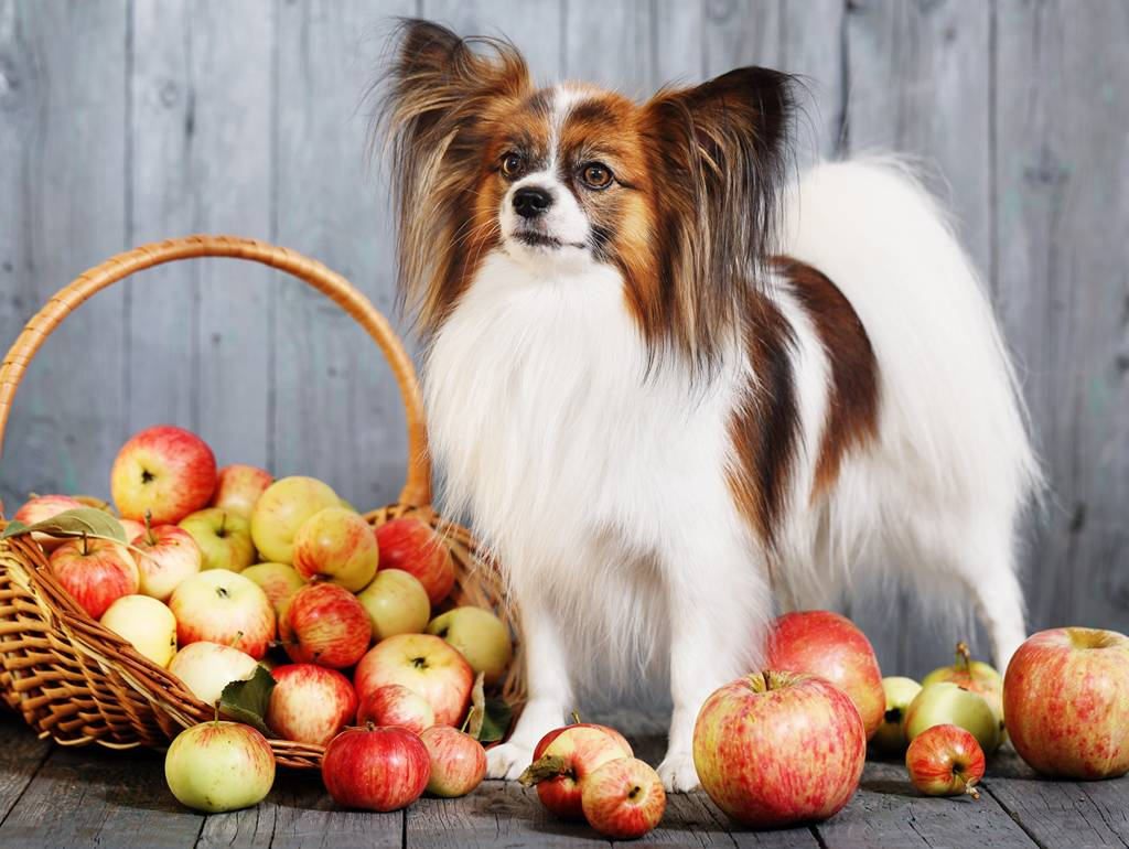 Are Apples Safe for Dogs