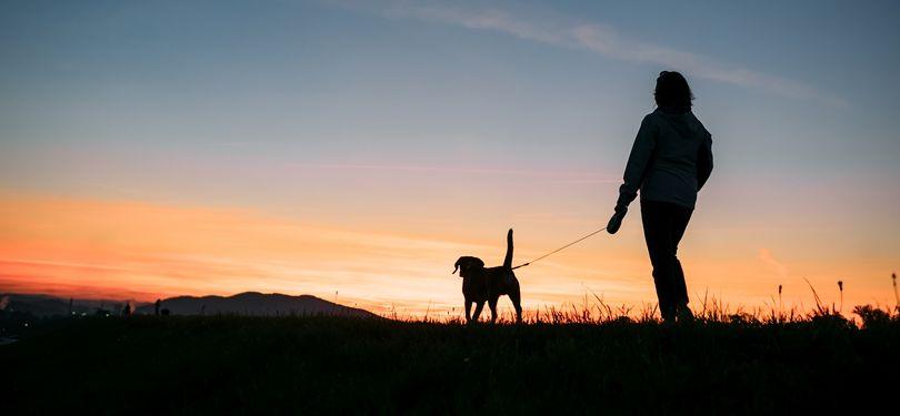 Walking Your Dog at Night