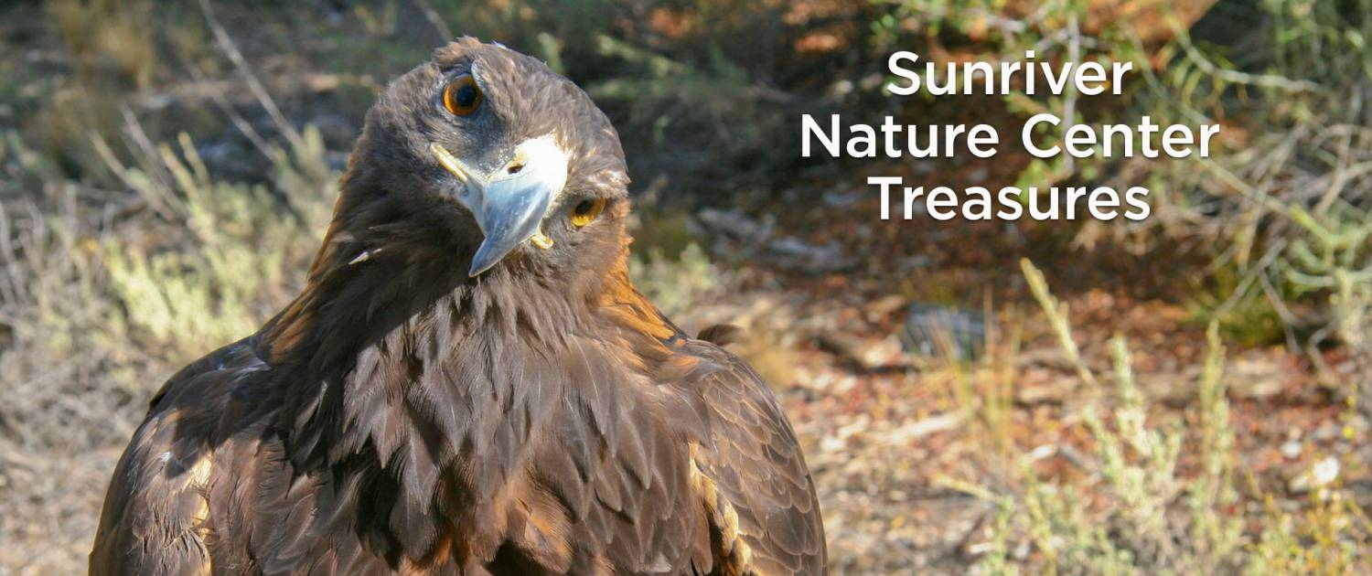 Sunriver Nature Center Treasures