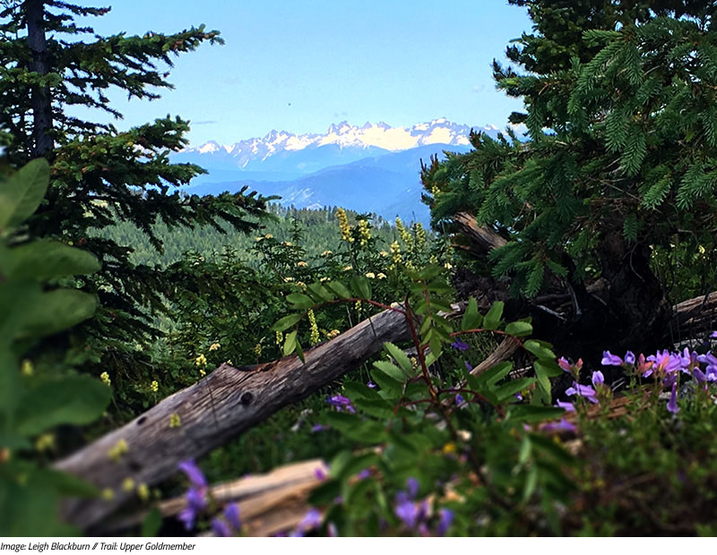 Sovereign Cycle Ride Diary: Finding Awesome in Nelson, BC. Image by Leigh Blackburn on Upper Goldmember trail.