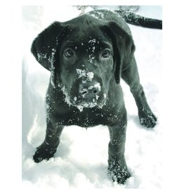 Oliver in Snowflakes Holiday Cards