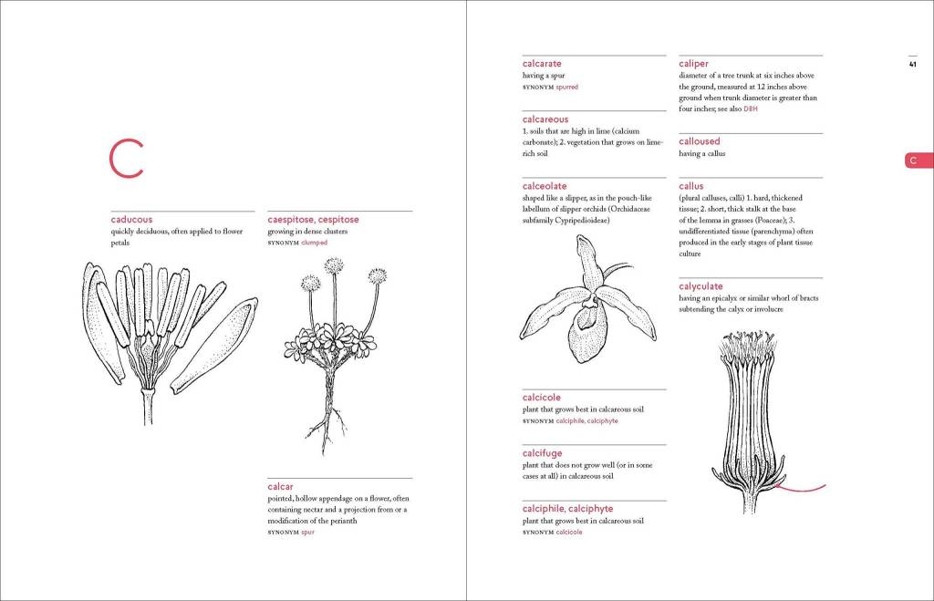 Timber Press A Botanist's Vocabulary