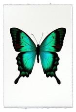 Barloga Studios Butterfly #1 Print