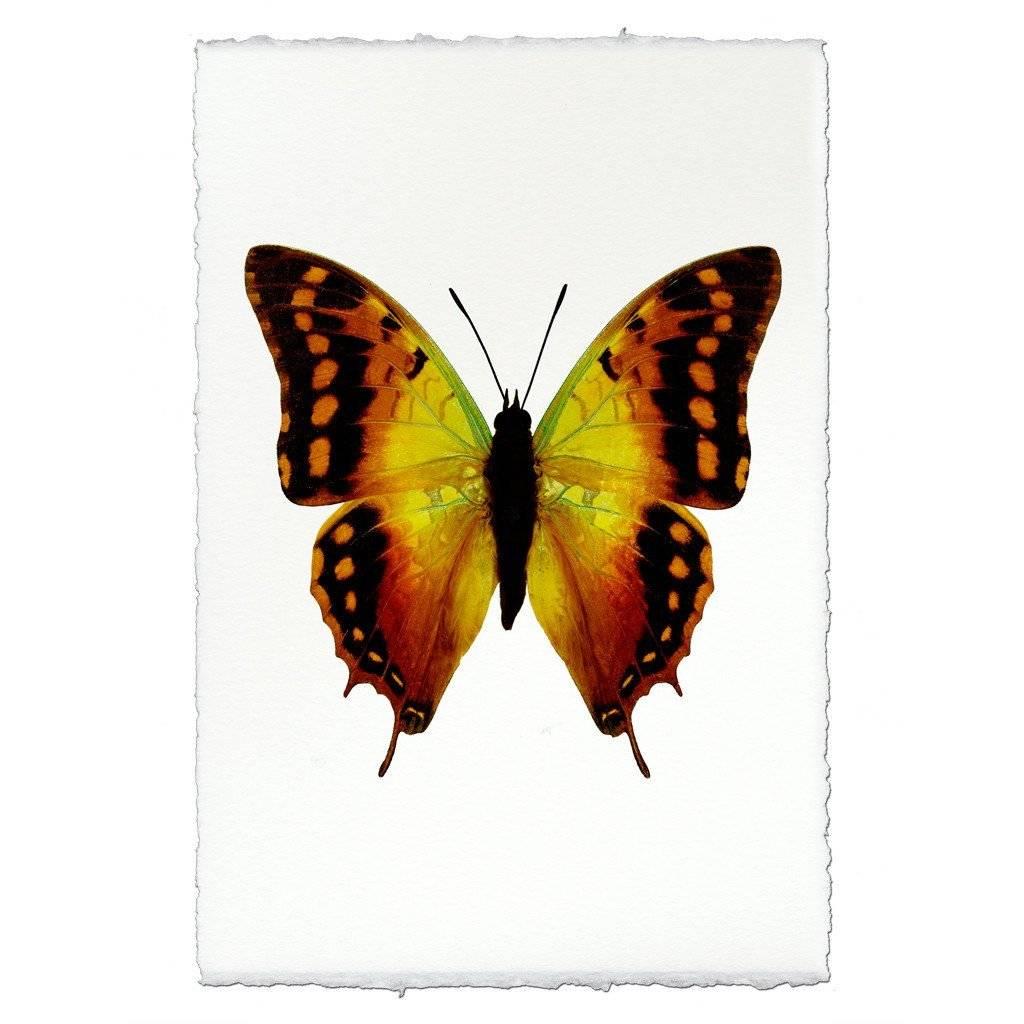 Barloga Studios Butterfly #4 Print