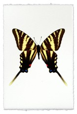 Barloga Studios Butterfly #6 Print