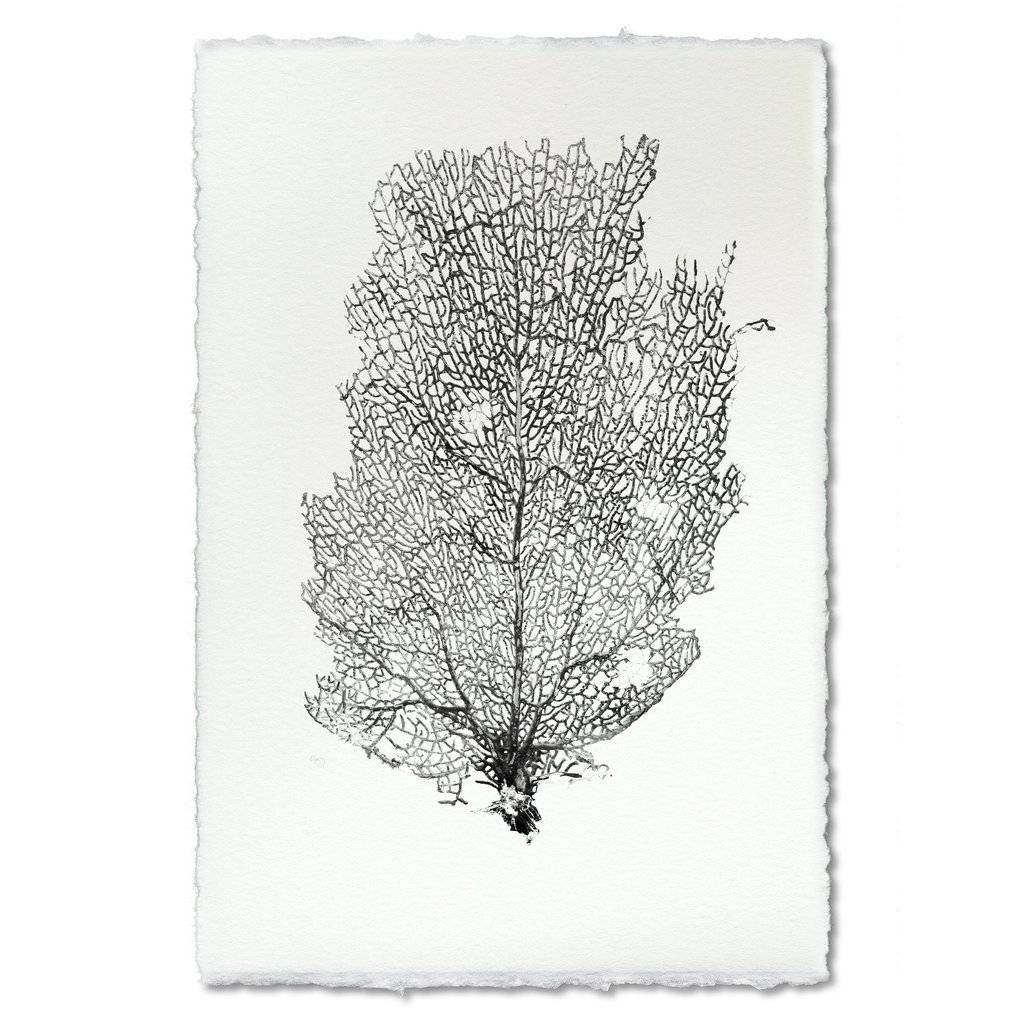 Barloga Studios Sea Fan #2 Print
