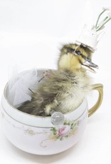 At-Choo Bubbles the Duckling with a Tea Cup