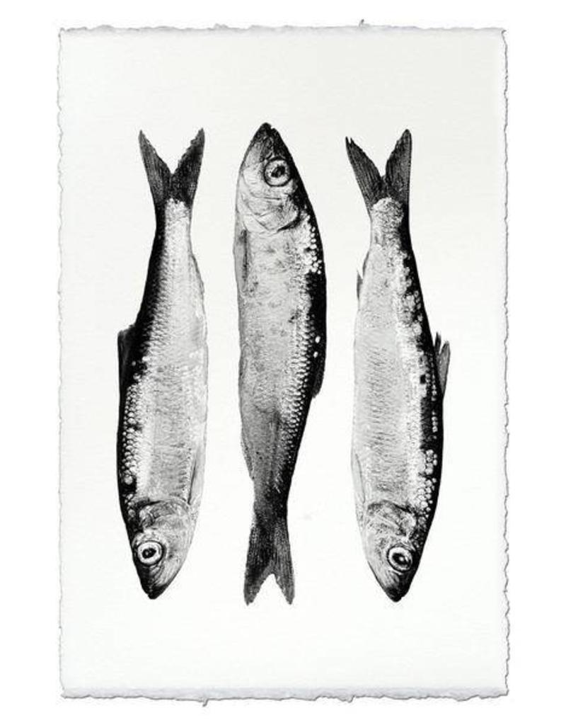 Barloga Studios Three Herring Print